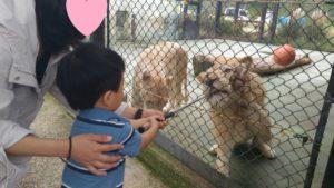 ホワイトライオン餌やり