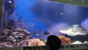 桂浜水族館水槽3