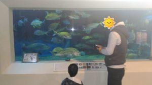桂浜水族館水槽2
