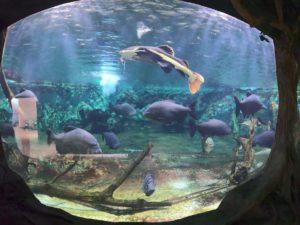 新屋島水族館2