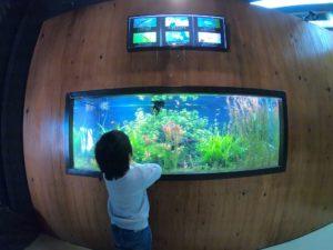 新屋島水族館3