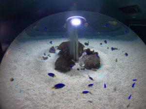新屋島水族館4