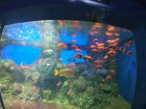 新屋島水族館6