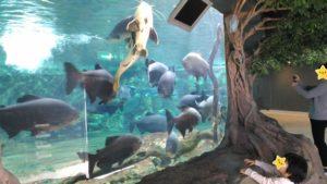 新屋島水族館5