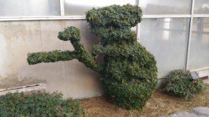 コアラの植木