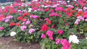 植物館 花