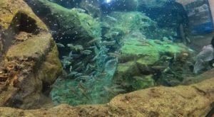 四万十川の生物