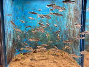 四万十川の生物3