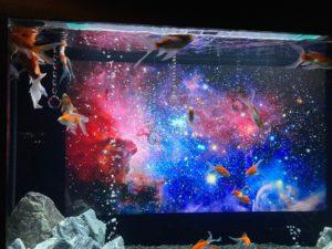 金魚 宇宙3