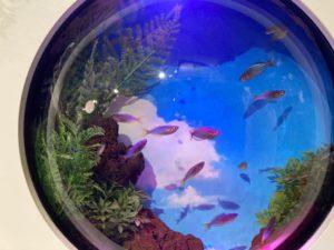 金魚 地球