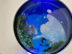 金魚 地球2